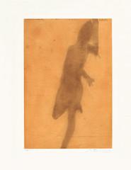 16170.jpg
