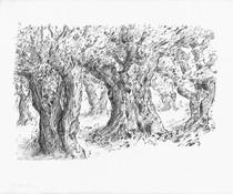 Pels camins de l' Empordà: Huerto de olivos